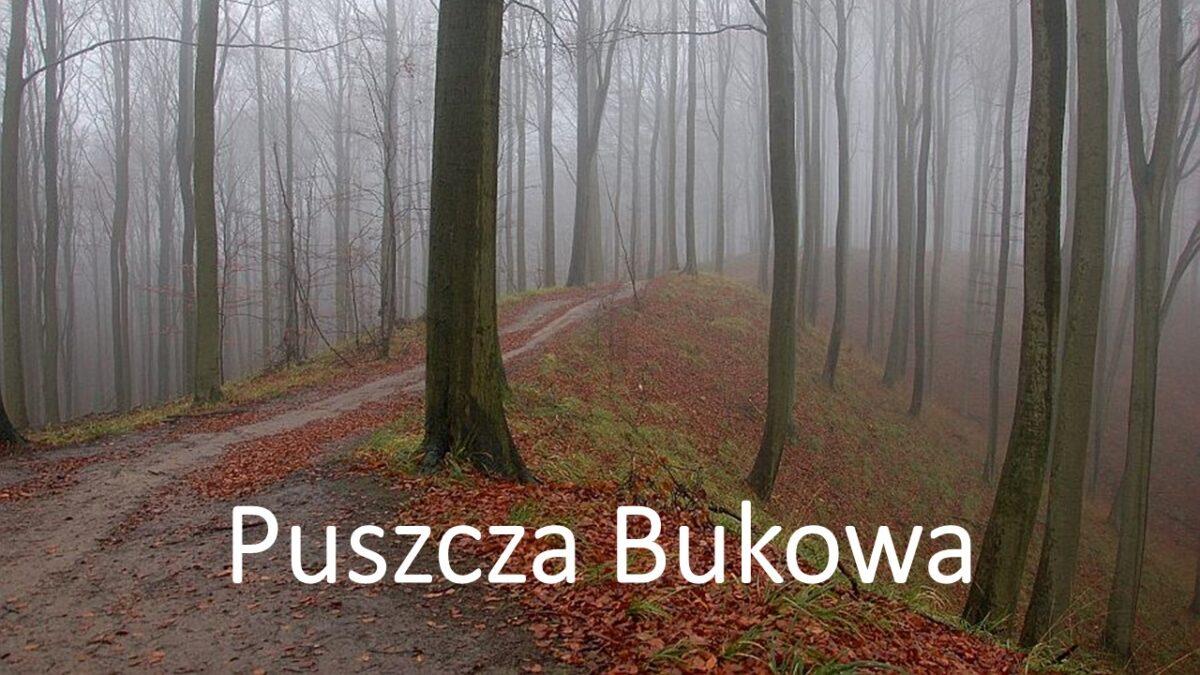 Puszcza Bukowa